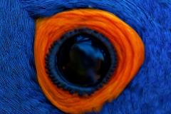 Arara Azul na ONG Rancho dos Gnomos
