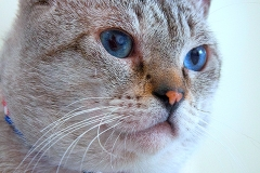 Pets_010_by_EricoMabellini_IF
