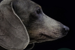Pets_014_by_EricoMabellini_IF