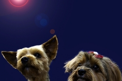 Pets_016_by_EricoMabellini_IF